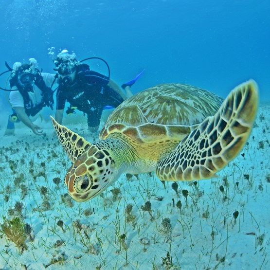 Discovery Scuba Diving 1 Tank + Turtle Coral Reef